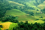 Rice fields in Sapa, Lao Cai, Vietnam